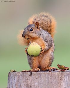 ~~Hungry Fox Squirrel by Danny Brown - It's ALL mine, mine I tell ya!~~