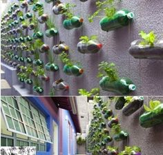 Creative plant wall - great recycling idea