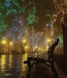 Fairy Lights Trees - Animated Gif