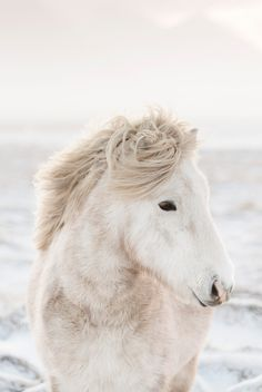 "...of the Shaggy  White Pony I used to tell to Abi about in a story called ""Abi's Apples"" when Abi was a toddler."