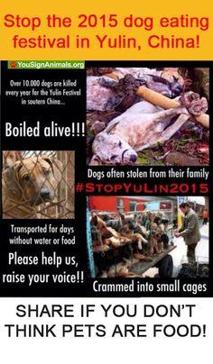 Help animal abuse