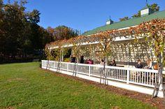 Veritas Winery | Charlottesville! Virginia