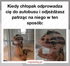 Repostuj.pl :: chlopak-laski-zrozumiejo-autobus