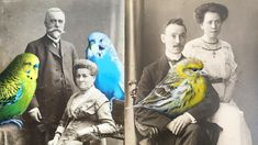 Painting colorful birds on old photographs
