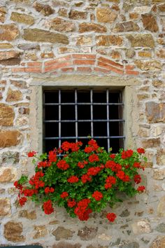 The photographer photographed these red geraniums at the restaurant that he stopped at for lunch in Chianti country, Italy.
