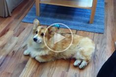 My Dog Refuses To Go Outside While It Is Raining. It Makes Me Laugh Uncontrollable! Little Brothers, Network For Good, Cute Corgi, Wonderful Picture, Cute Gif, Pet Health, Go Outside, Pet Birds, The Outsiders