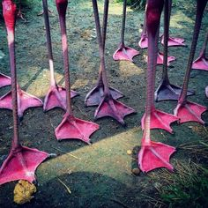 Flamingo Feet at Sarasota Jungle Gardens! Me: You're counting on people never having seen a flamingo in real life, aren't you? Pretty Birds, Love Birds, Beautiful Birds, Animals Beautiful, Pretty In Pink, Cute Animals, Foto Flamingo, Flamingo Art, Pink Flamingos