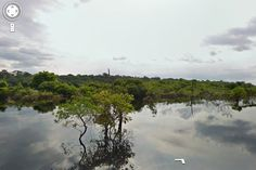 Exploring the Amazon with Google Street View!  Neat!