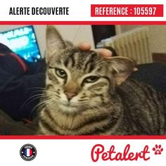 25.03.2017 / Chat / Fouras / Charente-Maritime / France