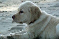 tired beach boy!