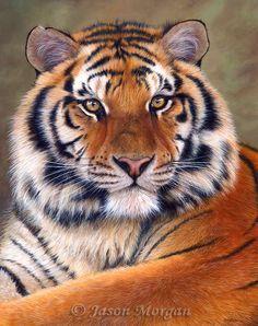 Tiger painting by Jason Morgan