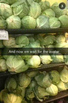 Nooooo not my cabbages! !!