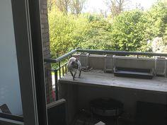 Op verkenning balkon voorkant