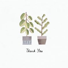 Lianne Harrison - Thank You Plants for Paperwhale Greeting Cards www.lianneillustrates.etsy.com