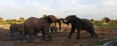 Safari Camp Accommodation Northern Botswana   Elephant Sands