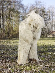 Charles Fréger, photographer, has been establishing a large series of portraits about several communities in the world. Charles Freger, Monuments, Animal Costumes, Wild Ones, Wild Things, Portraits, Winter Beauty, Creature Design, Archetypes