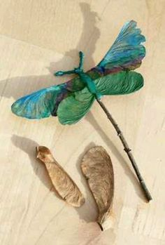 Maple seed dragon flies