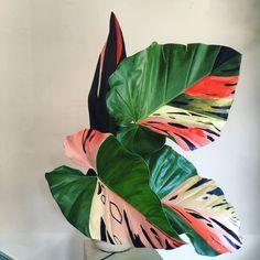Sophie Parker of WIFE - Botanical Artist — Katja Ollendorff Deco Floral, Floral Design, Leaf Art, Pretty Flowers, Houseplants, Indoor Plants, Planting Flowers, Greenery, Flower Arrangements