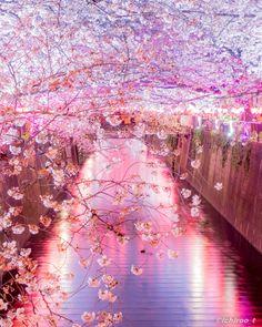 イチロ「会社帰りに立ち寄れる夜桜撮影スポット」
