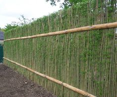 Living willow hedge panels by Green Barrier of Scotland. Living hedge sections come in pre-constructed 1m widths and in heights from 1.2 to 2.5m. They are planted directly into topsoil to a depth of 60cm (2 feet), to provide support while the roots grow. www.esi.info