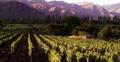 Roteiro do vinho de carro na Argentina #argentina #viagem