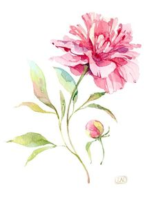 Peony, from a nice Russian-language web page devoted to watercolor art. There are many paintings shown, but unfortunately very few include the artist's name. Watercolor Cards, Watercolour Painting, Watercolor Flowers, Painting & Drawing, Watercolors, Floral Illustrations, Botanical Illustration, Watercolor Illustration, Art Plastique