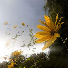 "500px / Photo ""Sunshine"" by kujaja jaja"