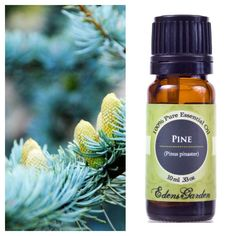 Try adding several drops of pine oil to a cup of water and mist over carpets as a carpet freshener.  Pine (Pinus pinaster) Woody, sweet resinous, fresh, and pine evergreen aroma. Aromatherapists credit it with being refreshing, invigorating, stimulating, strengthening, and very popular in an aromatherapy bath to revive tired muscles.#pine #essentialoil #pineessentialoil