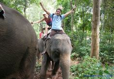 I would love to ride an elephant in the forest :)