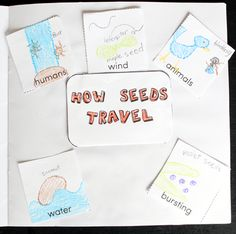 How seeds travel! Plant Printables for a Plant Unit
