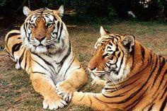 Gotta love Big Cat Rescue inTampa!