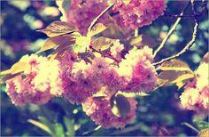 """Bild von Tanja Riedel - """"Mandelblüten Pastell"""""""