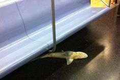 Somebody Found a Dead Shark On a Queens-Bound NYC Subway Last Night