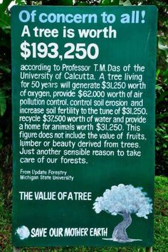 The value of a tree (=priceless!) I like Ecosia!!! Ecosia — The search engine that plants trees!