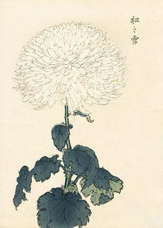 長谷川契華 Keika Hasegawa 『契花百菊 松之雪』 Chrysanthemum Wood Block Prints 1st Edition 1893