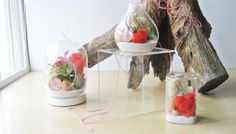 Triple  Valentine's Day Air Plant Terrarium - Valentines Day Gift , Free Gift Packaging , Love, Air Plant, DIY, Romantic, Unique, XO on Etsy, $80.00