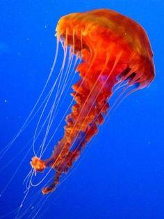 A melhor aquário em os EUA? O Aquário de Monterey Bay em fotos (em Monterey, Califórnia) by Divonsir Borges