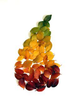 it's pear season (mary jo hoffman) Autumn Art, Autumn Leaves, Collections Photography, Organic Art, Scene Photo, Leaf Art, Naturally Beautiful, Love Photos, Beautiful World