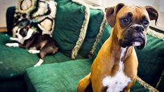 Ist die Begrenzung der Anzahl an Hunden im #Mietverhältnis #Mietvertrag erlaubt? #HUNDERECHT #Hund #Tierrechtsexperte ACKENHEIL http://www.tierrecht-anwalt.de http://www.der-tieranwalt.de
