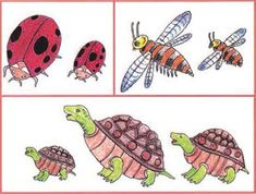 Κεφ. 1 - Προσανατολισμός στον χώρο - Ενότητα 1 Turtle, Animals, Animais, Turtles, Animales, Animaux, Tortoise Turtle, Animal Books, Animal