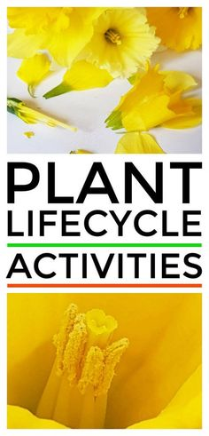 Plant lifecycle acti