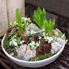 http://holmsundsblommor.blogspot.se/2011/11/julgrupp-adventsgrupp.html Julgrupp i vitt med hyacinter
