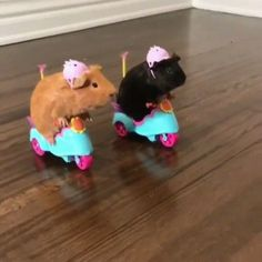 Biker Guinea Pigs via Classy Bro Baby Animals Pictures, Cute Animal Photos, Funny Animal Pictures, Baby Animals Super Cute, Cute Little Animals, Funny Animal Jokes, Cute Funny Animals, Funny Hamsters, Cute Guinea Pigs