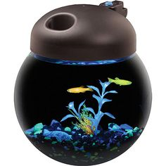Aqua Culture Betta Fish Globe Bowl Aquarium with Mutli-Color LED Light Hood, 1 Gallon:: I think i want to get a betta fish, since the males are so pretty, it would look nice, yes?!