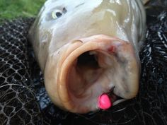 baits for spring fishing