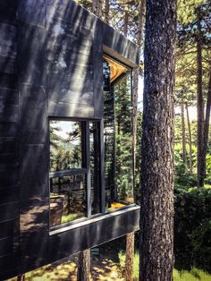 Casa Levene - among the trees - and was designed around retaining all existing Scotts Pine on site.