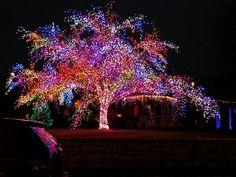 Magic Tree in Columbia Missouri. Christmas Tree Outside, Christmas Lights, Columbia Missouri, Different Seasons, So Creative, Gods Creation, Bright Lights, Beautiful Christmas, Tis The Season