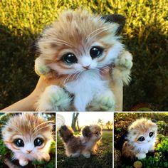 Omg cutest thing ON EARTH