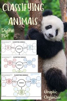Teaching Kids, Kids Learning, Internet Scavenger Hunt, Classifying Animals, Animal Graphic, Types Of Animals, Never Stop Learning, Text Features, Book Study