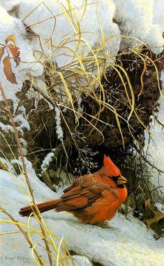 winter Cardinal - The Art of Robert Bateman Wildlife Paintings, Wildlife Art, Animal Sketches, Batman, Winter Art, Canadian Artists, Back To Nature, Bird Art, Beautiful Paintings